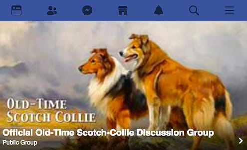 screenshot from Official Old-Time Scotch Collie Discussion Group on Facebook